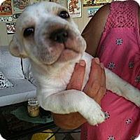 Adopt A Pet :: Jackson - Phoenix, AZ