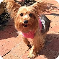 Adopt A Pet :: Tammy - Fairfax, VA