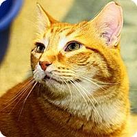 Adopt A Pet :: Tom Tom - Lombard, IL