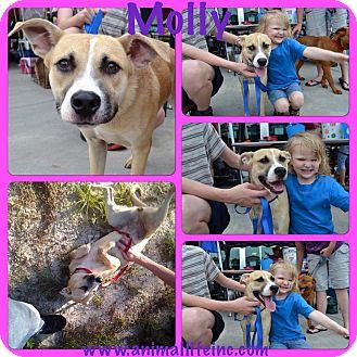 Boxer/Carolina Dog Mix Dog for adoption in sanford, North Carolina - Molly
