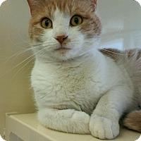 Adopt A Pet :: Oscar - Chesapeake, VA