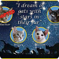 Adopt A Pet :: Bramble - Edmond, OK