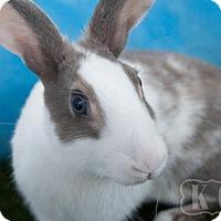 Adopt A Pet :: Mister - Pflugerville, TX