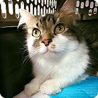 Adopt A Pet :: Chucho - Chicago, IL
