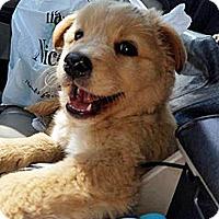 Adopt A Pet :: P17 Splash - BIRMINGHAM, AL
