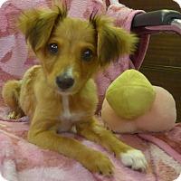 Adopt A Pet :: Daphne - Manning, SC