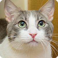 Adopt A Pet :: Baby Boy - Irvine, CA
