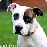 Adopt A Pet :: Rhiana - Appleton, WI