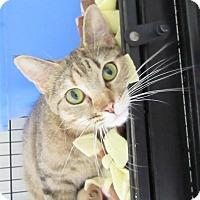 Adopt A Pet :: Cleopatra - Glenwood, MN