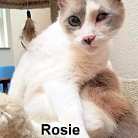 Adopt A Pet :: Rosie - Oklahoma City, OK