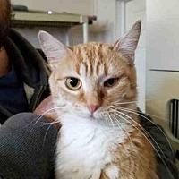 Adopt A Pet :: TONYA - Rogers, AR