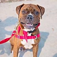 Adopt A Pet :: Chris - Austin, TX