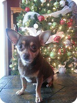 Chihuahua Dog for adoption in Rome, Georgia - LC