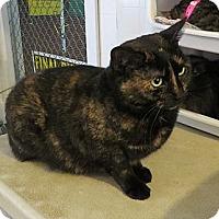 Adopt A Pet :: Java - Geneseo, IL
