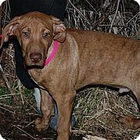 Adopt A Pet :: Kane - Milford, CT