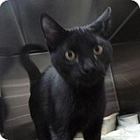 Adopt A Pet :: Toby - St. Petersburg, FL