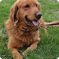 Adopt A Pet :: Charlie Girl - Foster, RI
