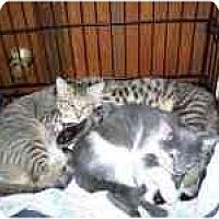 Adopt A Pet :: Scared Sammy - Grand Rapids, MI