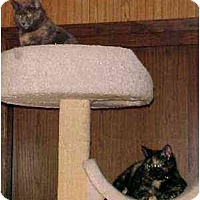 Adopt A Pet :: Mona and Tara (sisters) - Portland, OR