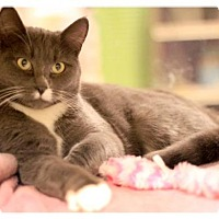 Adopt A Pet :: Lucy (FS) - Trenton, NJ
