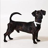 Adopt A Pet :: Poppy - Akron, OH