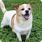 Adopt A Pet :: Yuri