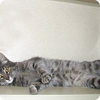 Adopt A Pet :: Louise - Ruidoso, NM