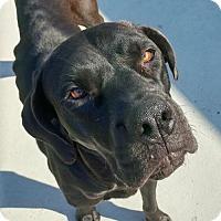Adopt A Pet :: Ellie - Chambersburg, PA