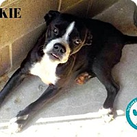 Adopt A Pet :: Jackie - Kimberton, PA