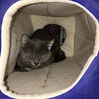 Adopt A Pet :: Muddy Waters - Stroudsburg, PA