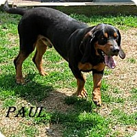 Adopt A Pet :: Paul - Shelby, NC