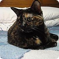 Adopt A Pet :: Lulu - Cambridge, ON