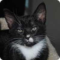 Adopt A Pet :: Sam - Monroe, NC