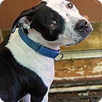 Adopt A Pet :: Peaches - Reisterstown, MD
