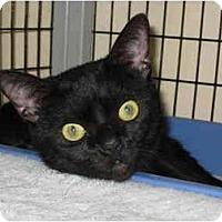 Adopt A Pet :: Magic - Deerfield Beach, FL