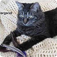 Adopt A Pet :: Margaret - Portland, OR