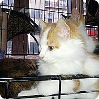 Adopt A Pet :: Murdoch - Toronto, ON