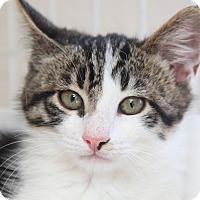Adopt A Pet :: Marley - San Rafael, CA