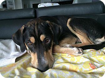 Shepherd (Unknown Type) Mix Dog for adoption in Toronto, Ontario - Freddy