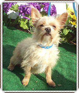 Terrier (Unknown Type, Small) Mix Dog for adoption in Marietta, Georgia - BONBON see also KARMA