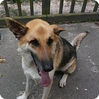 Adopt A Pet :: Bruno (Guest) - Roswell, GA