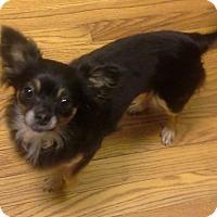 Adopt A Pet :: Mambo - Ball Ground, GA