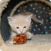 Adopt A Pet :: Elaine - Edmond, OK