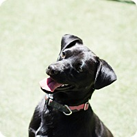 Adopt A Pet :: Ozzie - Hollister, CA