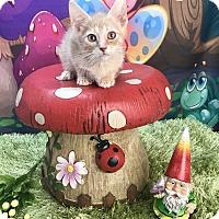 Adopt A Pet :: Barlow - Winchester, KY