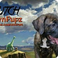 Adopt A Pet :: Butch - Wyoming, MI