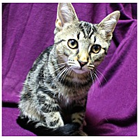 Adopt A Pet :: Jeremiah - Forked River, NJ
