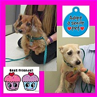 Adopt A Pet :: Lilly and Sugar - Shawnee Mission, KS
