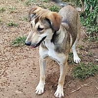 Adopt A Pet :: Saab - Sussex, NJ