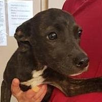 Adopt A Pet :: April - Walden, NY